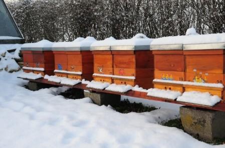winterizing-bees-1