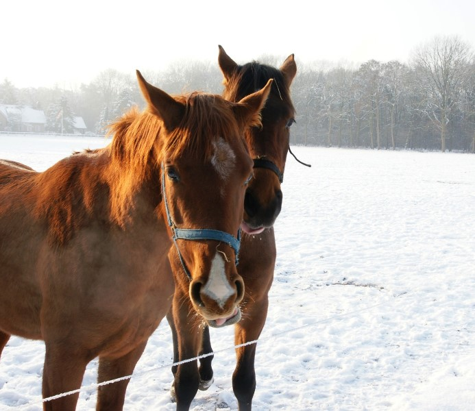 It's Time to Prepare Your Horses for Winter…By KassieKreissler