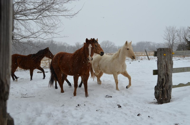 It's Time to Prepare Your Horses for Winter…By Kassie Kreissler