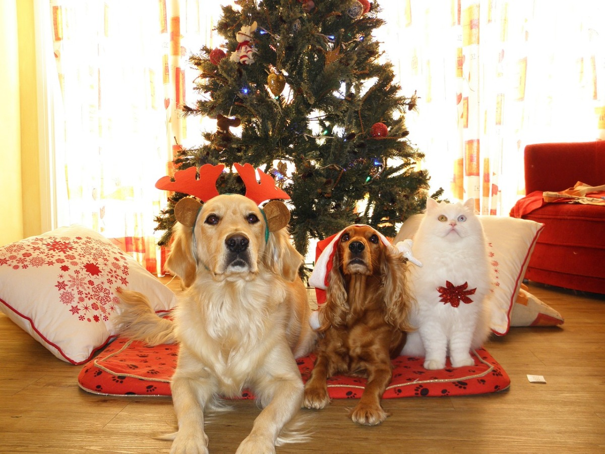 Keep Your Pets Safe This Holiday Season…By Mike Gallagher