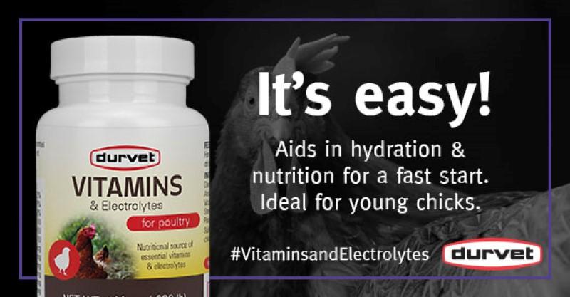 Product Spotlight: Vitamins andElectrolytes