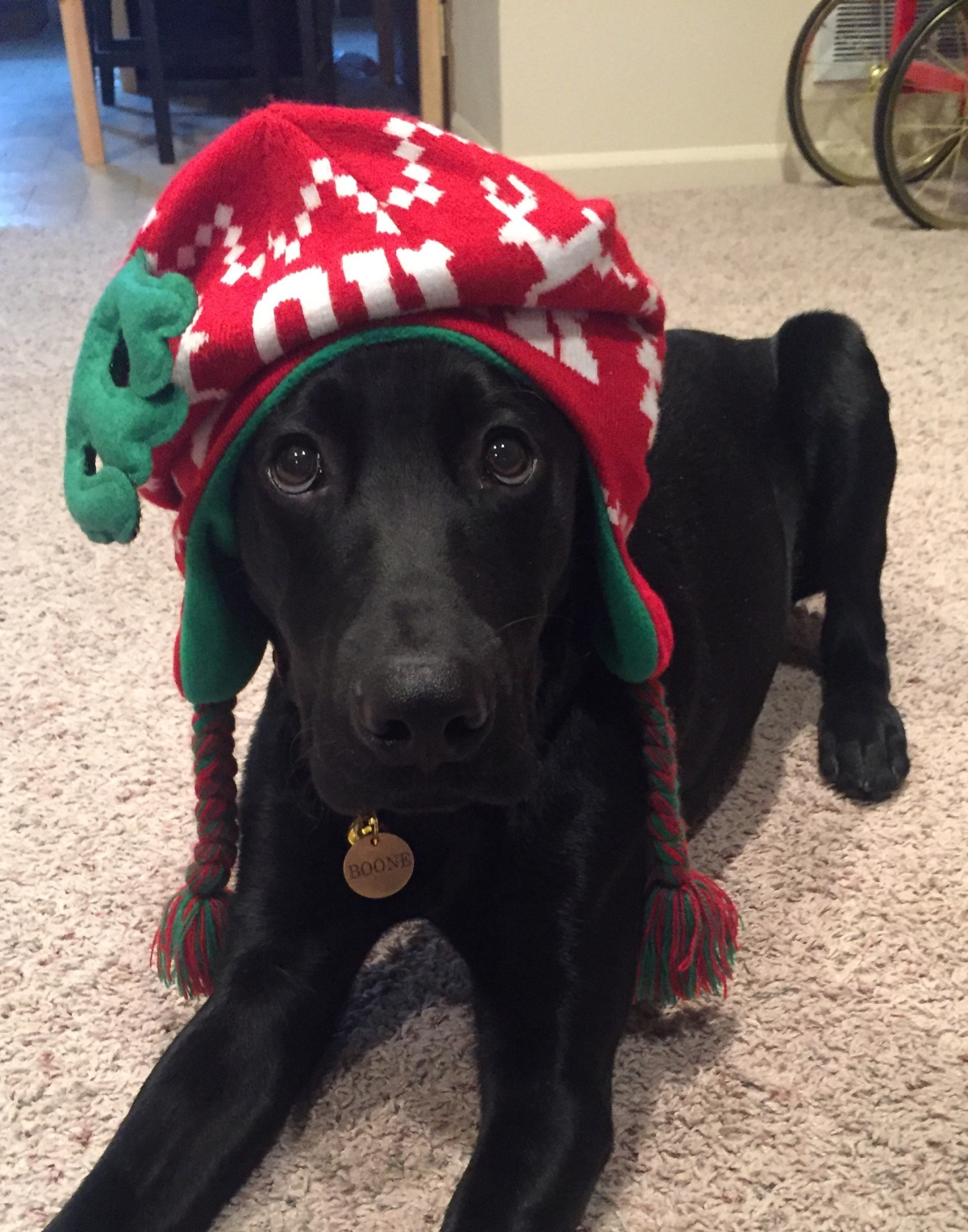 Santa Paws is Coming toTown